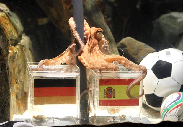 World Cup phenomenon Paul the Octopus dies