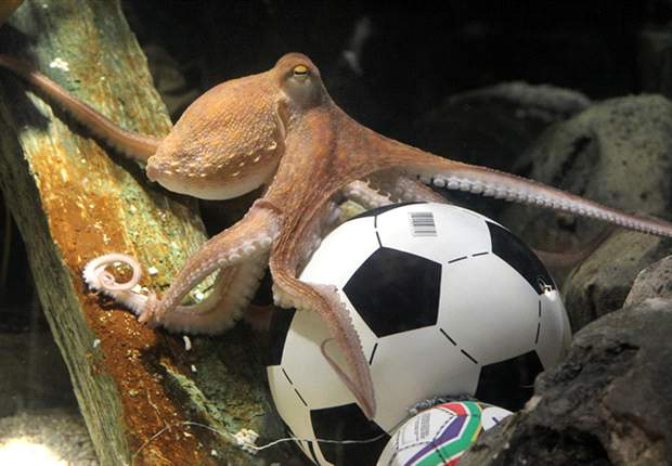 Obituary: Paul the Octopus (2008-2010)