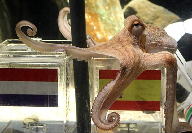 Iranian Leader Mahmoud Ahmadinejad Slams Paul The Octopus