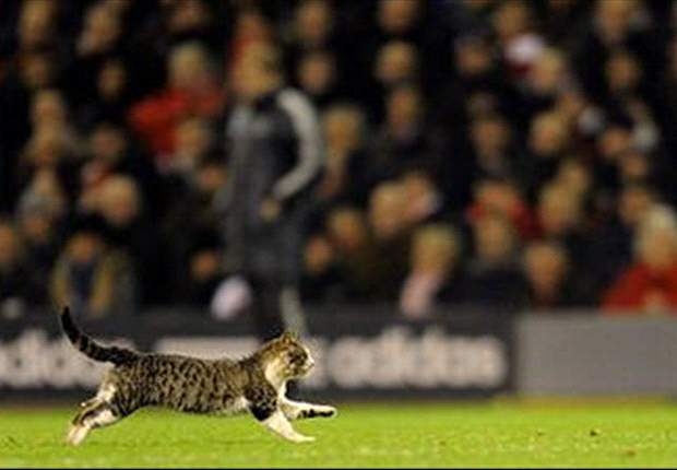 What we learned this week... Luis Suarez's kung-fu aside, Liverpool are so boring they can be upstaged by a stray Anfield cat