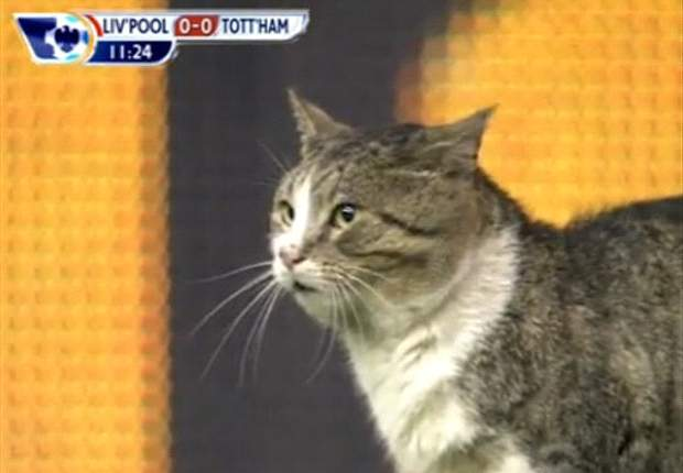 Controversy surrounds future of the Anfield Cat after he is discovered at a property in Liverpool