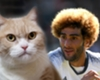 'Fellaini deal worse than my cat dying!'